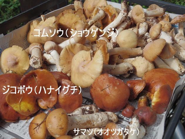 2015_0920_225136-IMGP5303